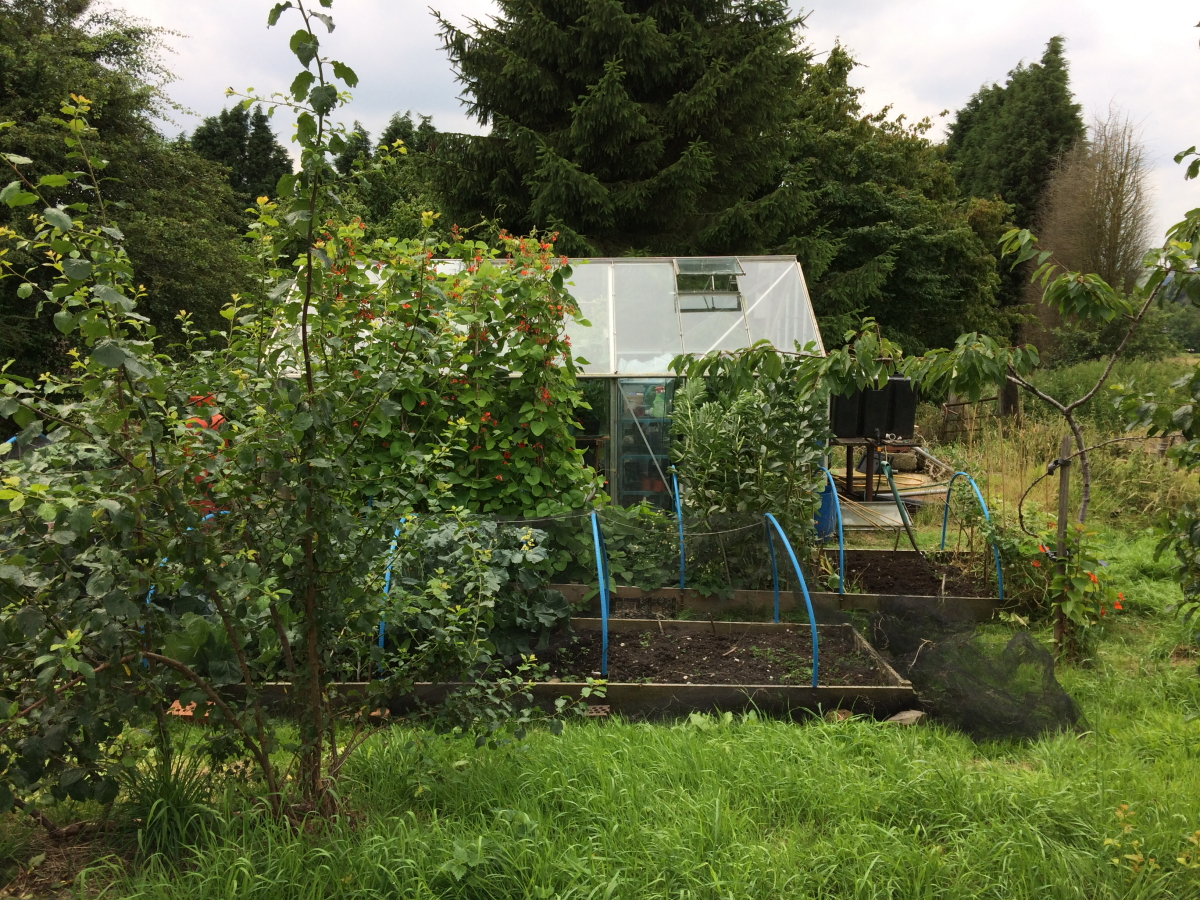 view of greenhouse from orchard - August