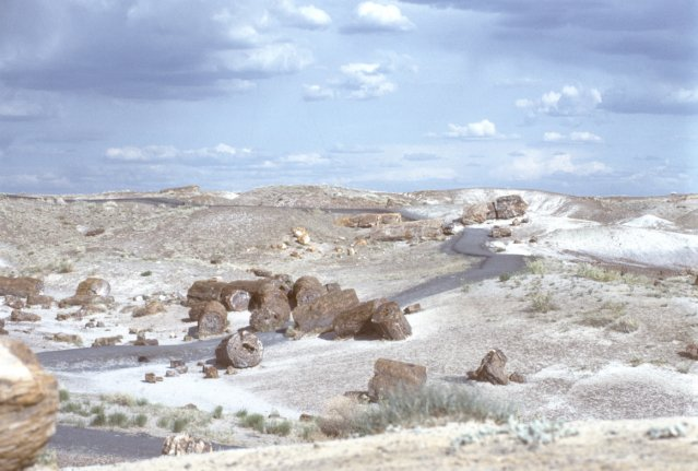 Petrified logs in painted desert