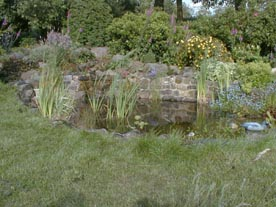 Pond with established plants