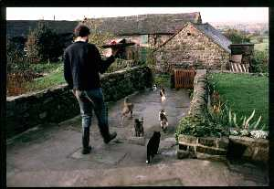 Andy feeding feral cats